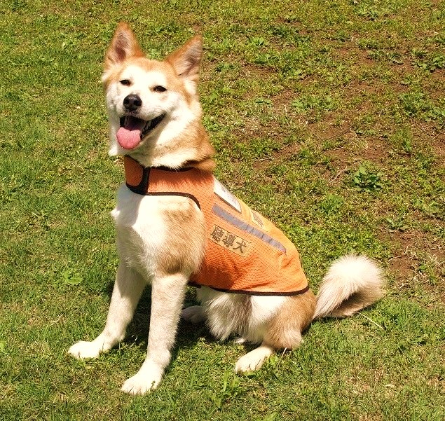 【さいたま市浦和区】聴導犬サマースクール2018(埼玉県障害者交流センター)