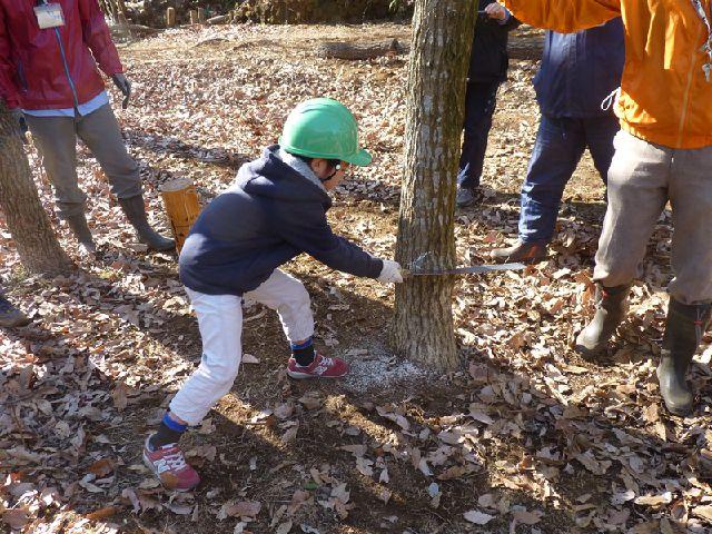 【入間市】里山体験教室 伐採体験とミニほだ木作り(さいたま緑の森博物館)