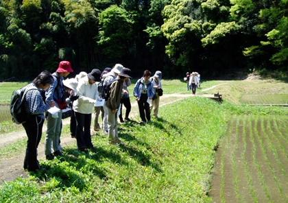 自然観察会の写真