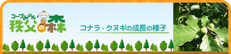 秩父の森|コナラ・クヌギの成長の様子