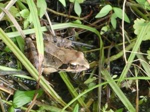 170728_002_frog.JPG