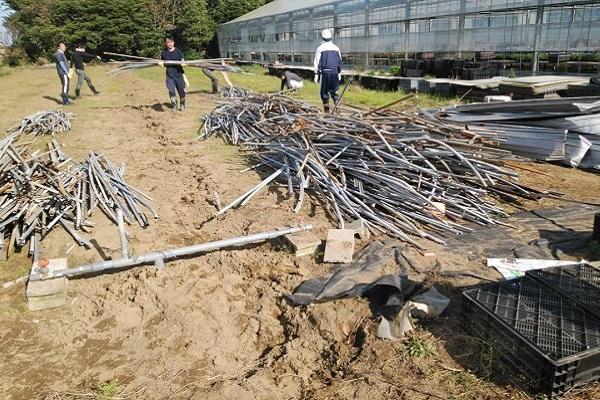 解体したビニールハウスの骨組みの片付け(11月2日)