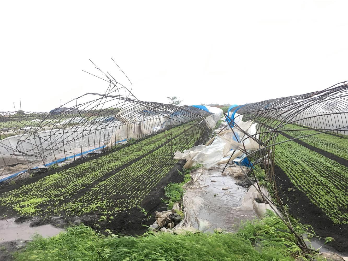 九州北部豪雨の様子