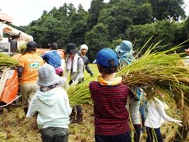 子どもたちも頑張って刈った稲をコンバインまで運びます!