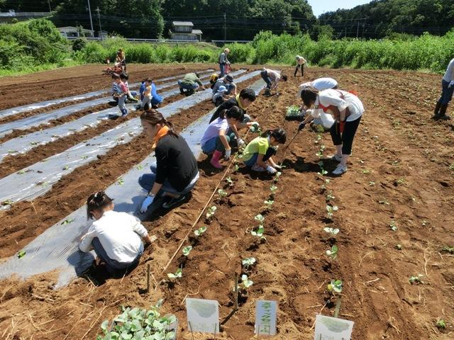 秋野菜5種類を植えつけました