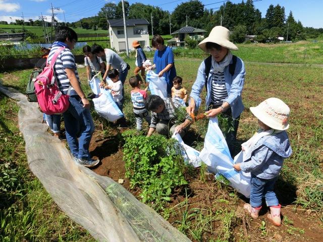 生産者のご好意でニンジンの収穫体験もできました