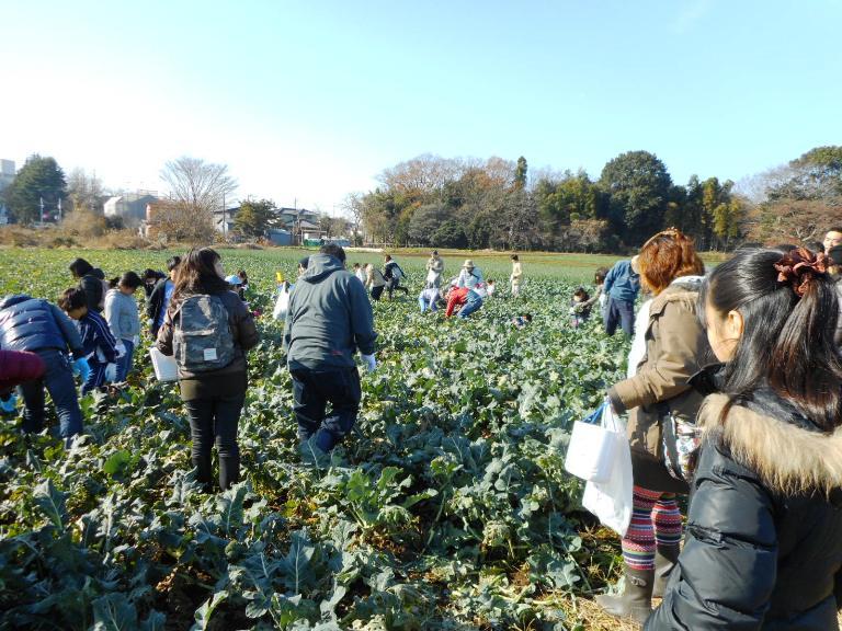 青空が広がり、収穫日和の1日でした