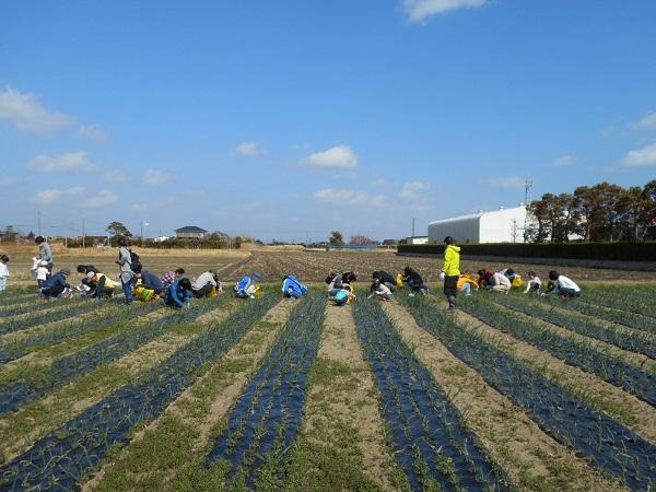 きれいな青空の下、みんなで頑張って草取りをしました!