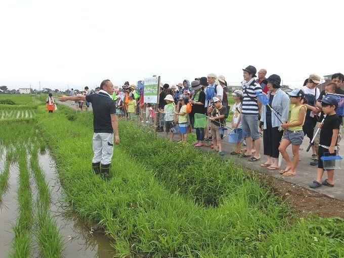 JA埼玉中央の梶原さん(写真左)より稲の成長について説明いただきました
