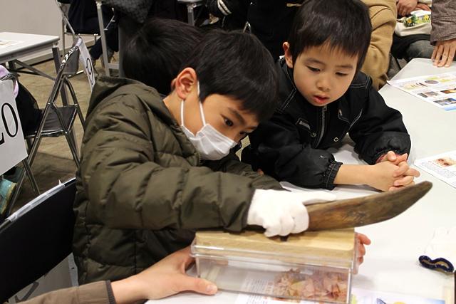 かつおぶし削りに挑戦する子供の写真