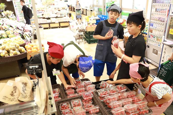 ミニトマトの陳列作業も体験。1パックずつ、傷みなどがないかチェックしながら並べていきます(コープ武蔵浦和店)