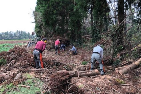 倒木を持ち運べる大きさに切断して運搬(10月27日)