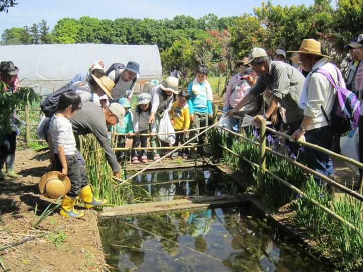 この小さな池の周りの草むらにも生物がいっぱい!観察しながら、生態系のお話を聞きました。
