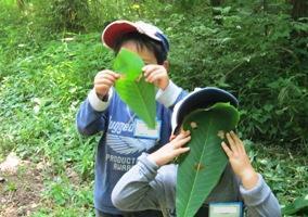 ホウノキの大きな葉っぱでお面を作ったよ!