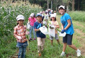 おみやげのトウモロコシの収穫。