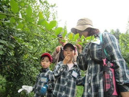 ブルーベリーの木によって味に違いがあることがわかりました。