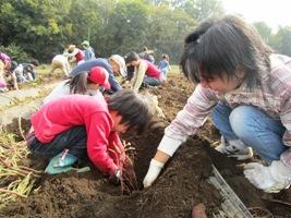 サツマイモをおらないように、掘って掘って!!