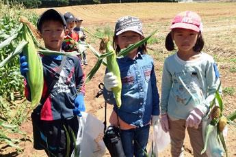 収穫したトウモロコシを手にした写真