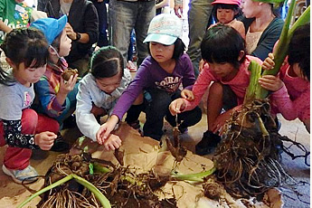 サトイモの説明をする菅澤さんの写真