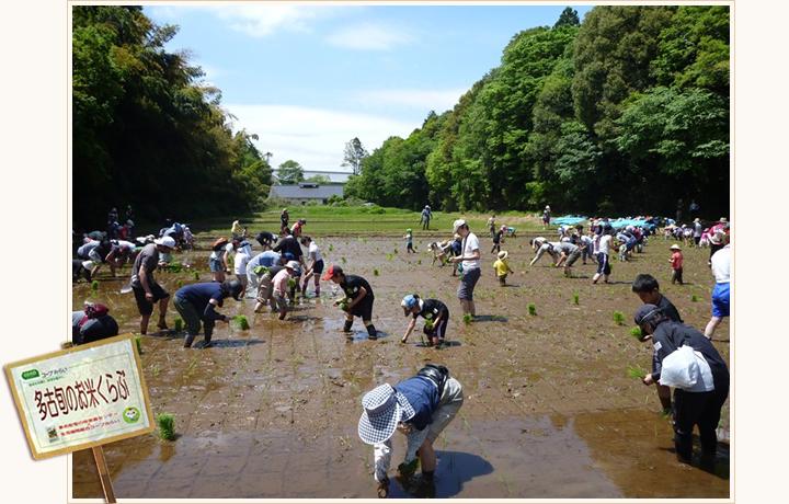 多古旬のお米くらぶ 田植え風景の写真